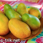 Khasiat buah mangga bagi kesehatan